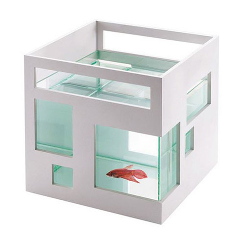 fish apartment