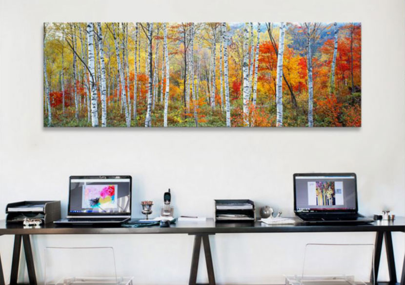 fall trees photographic print on canvas